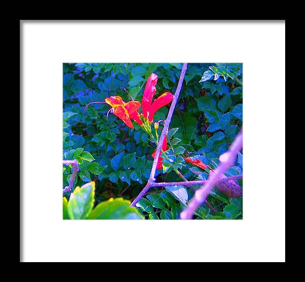 Florals Framed Print featuring the photograph Floral 5 by Dan Twyman