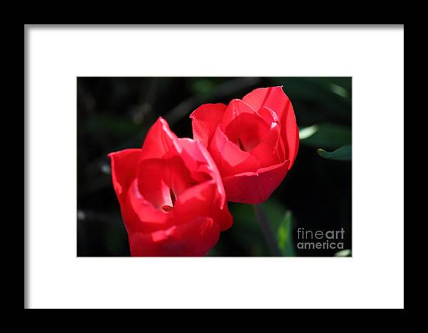 Floral Framed Print featuring the photograph Floral2 by Jim Mann