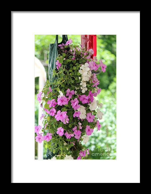 Floral Framed Print featuring the photograph Floral3 by Jim Mann