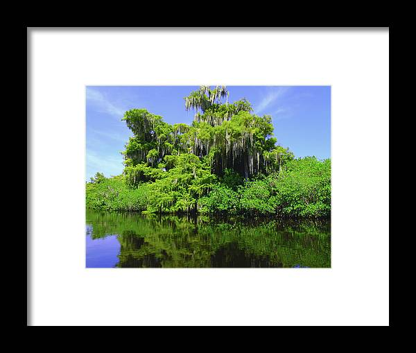 Swamp Framed Print featuring the photograph Florida Swamps by Carey Chen