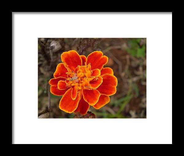 Framed Print featuring the photograph Flower 1 by Florentina De Carvalho