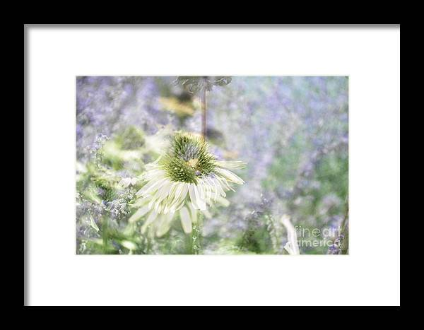 Flower Framed Print featuring the photograph Flower 6 by Bener Kavukcuoglu