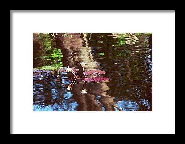 Lily Pad Framed Print featuring the photograph Flower And Lily Pad by Andy Fletcher