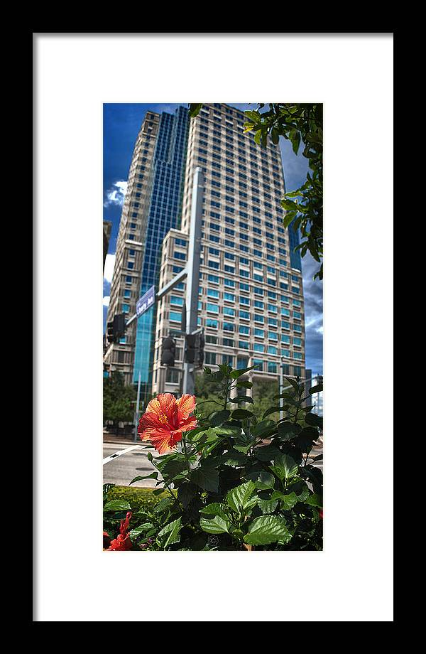 Flower Framed Print featuring the photograph Flower And Skyscraper by Brian Archer