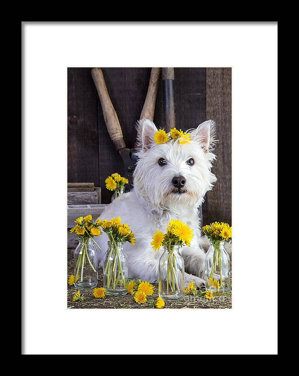 Dog Framed Print featuring the photograph Flower Child by Edward Fielding