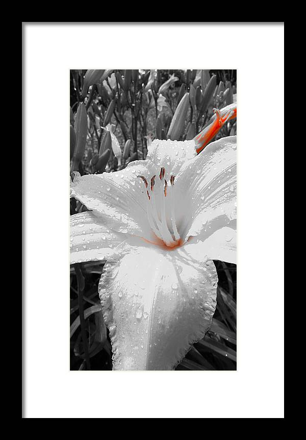 Flowers Framed Print featuring the photograph Flower Isolate by Tinjoe Mbugus