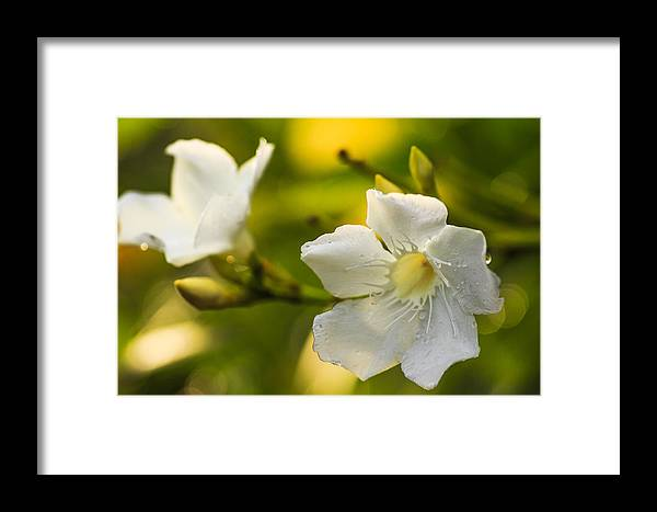 Macro Framed Print featuring the photograph Flower by Kyril Camomot