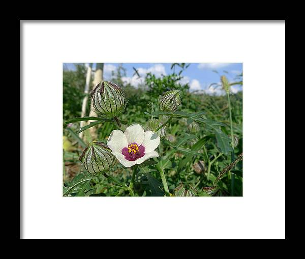 Orchard Framed Print featuring the photograph Flower Of An Hour by Richard Reeve