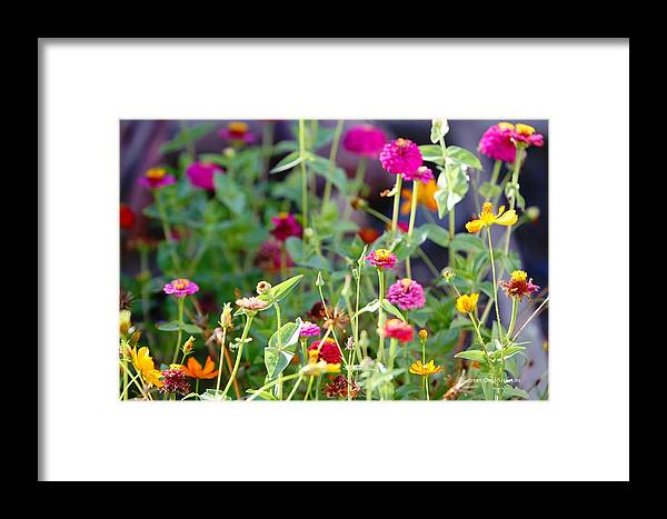 Flower Framed Print featuring the photograph Flower Patch by Audreen Gieger