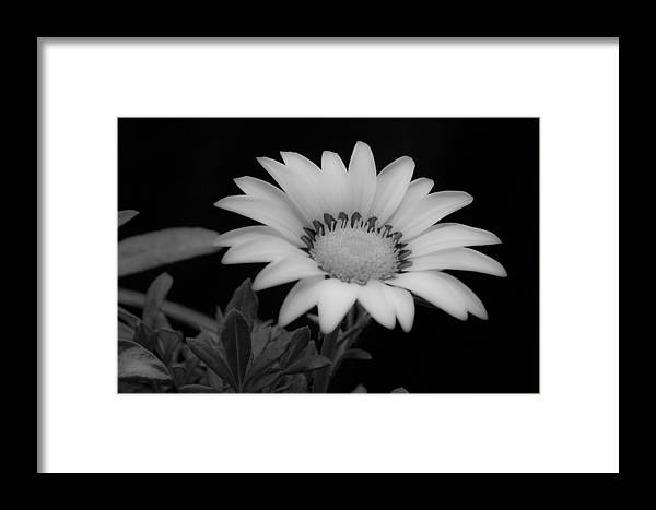 Flower Framed Print featuring the photograph Flower by Ron White