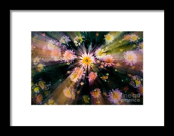 Night Framed Print featuring the photograph Flower Song On Fairy Wing by Michael Arend