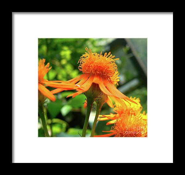 Flower Framed Print featuring the photograph Flower Top by Angela Wright