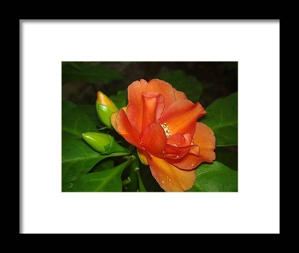 Flower Framed Print featuring the photograph Flower by Vishnujith A