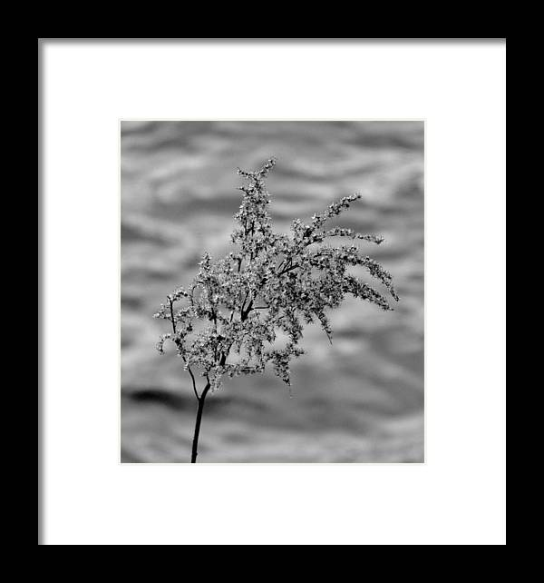 Black And White Framed Print featuring the photograph Flower Weed by Michele Nelson