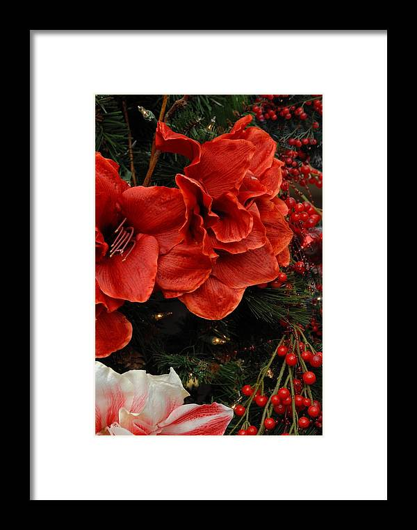 Amaryllis Framed Print featuring the photograph Flowers 554 by Joyce StJames