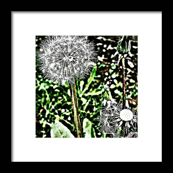 Beautiful Framed Print featuring the photograph Dandelions by J Roustie