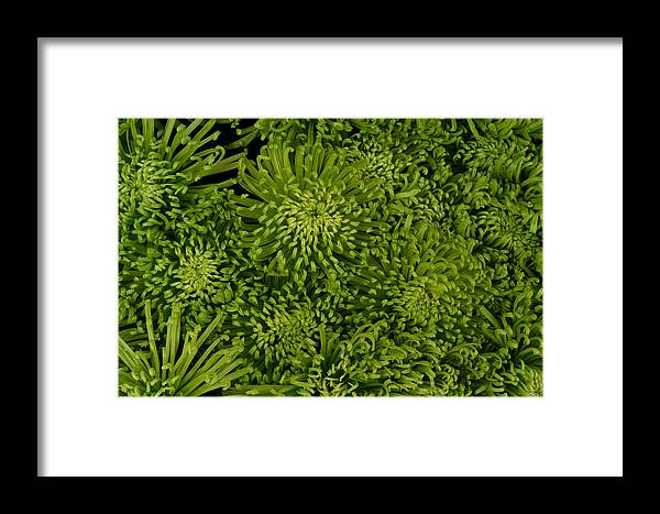 Flowers Framed Print featuring the digital art Flowers by Lyle Crump