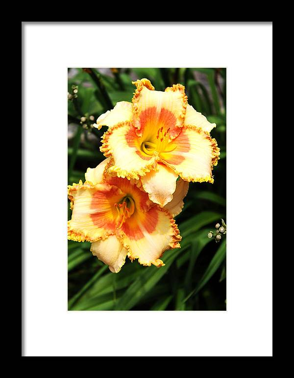 Flowers Framed Print featuring the photograph Flowers Of Summer by Elijah Gomez