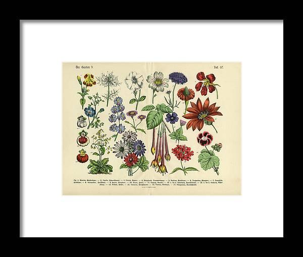 Lantana Framed Print featuring the digital art Flowers Of The Garden, Victorian by Bauhaus1000