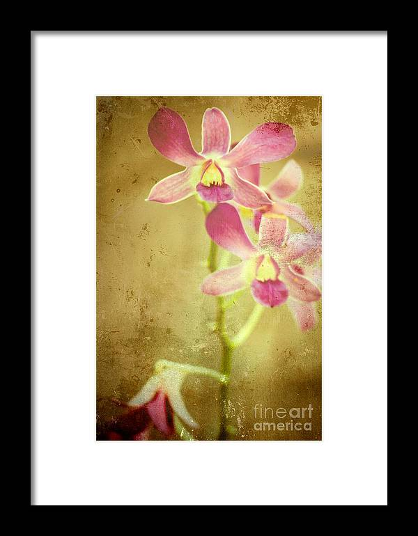 Flower Framed Print featuring the photograph Flowers by Sophie Vigneault
