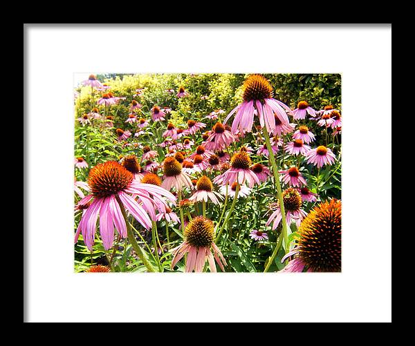Flower Framed Print featuring the photograph Flowers Standing Tall by Scott Hamilton