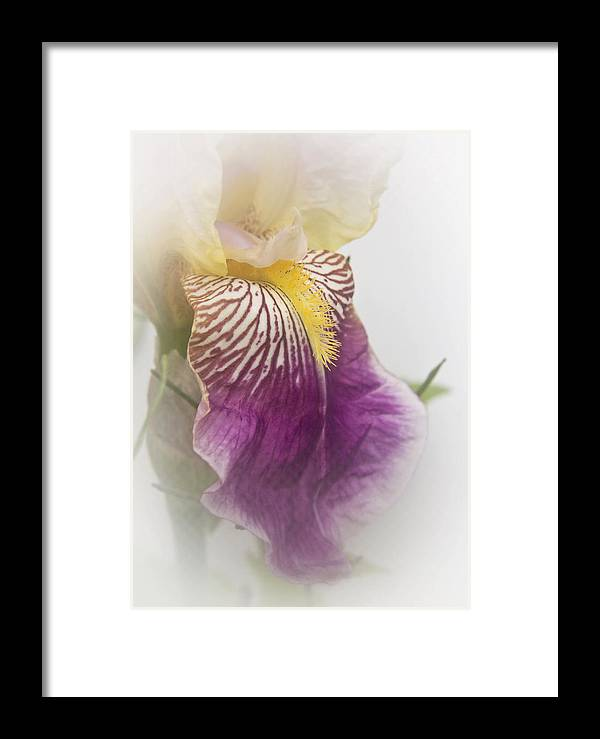 Nature Framed Print featuring the photograph Fl.purple4 by Theresa Heald