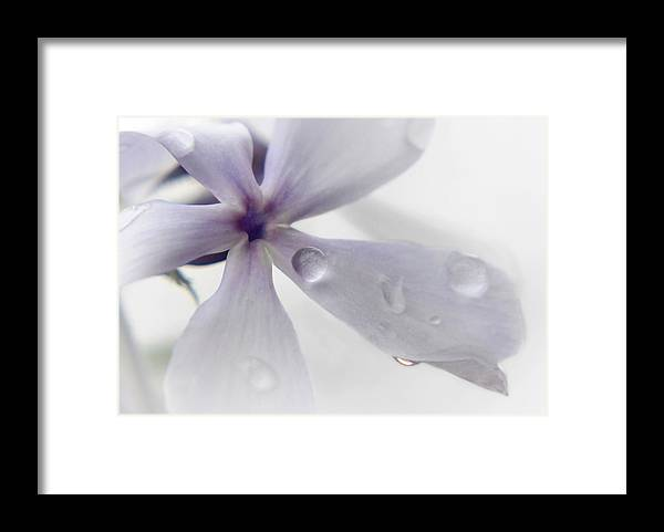 Flower Framed Print featuring the photograph Fl.purple5 by Theresa Heald