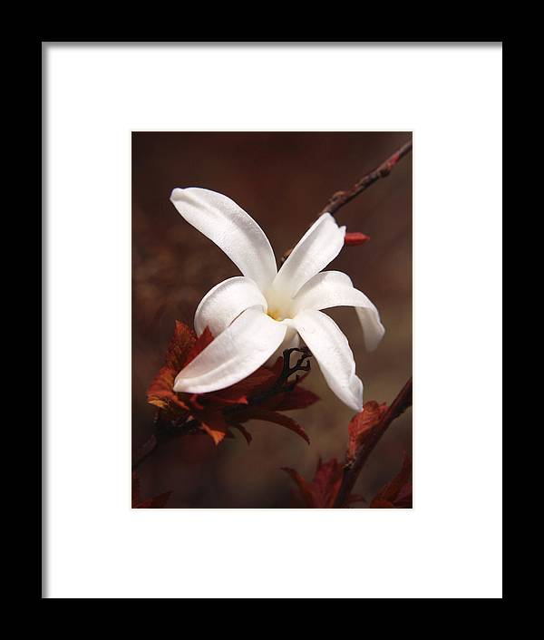 Flower Framed Print featuring the photograph Fl.white5 by Theresa Heald
