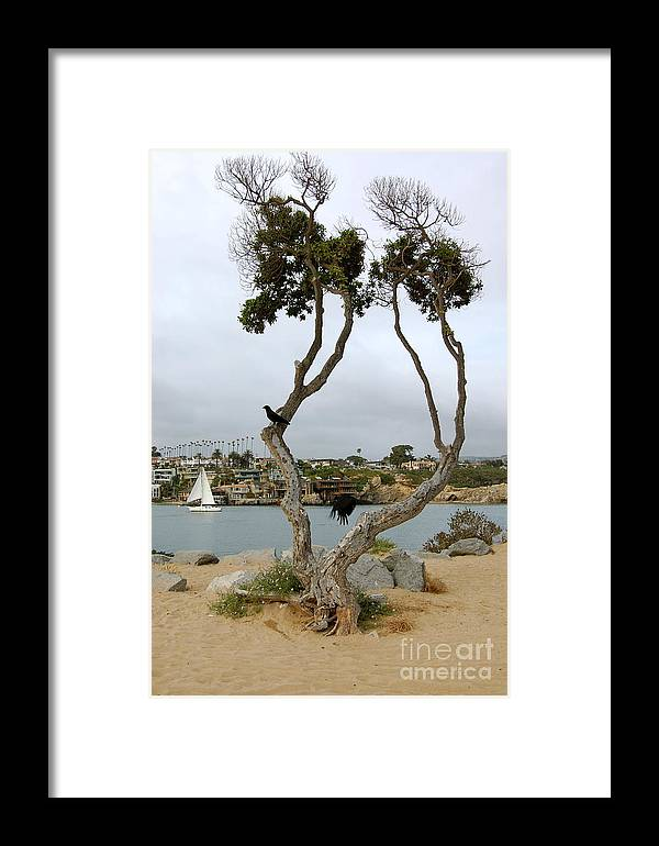 Newport Beach Framed Print featuring the photograph Fly Black Bird Fly by Andrea Aycock