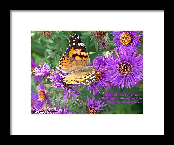 Butterfly Framed Print featuring the photograph Flying Flower by Sylvia Thornton