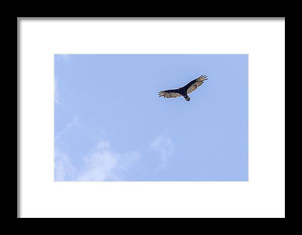 2013 Framed Print featuring the photograph Flying High by Terry Thomas