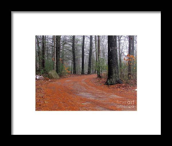Pines Framed Print featuring the photograph Fog In The Pines by Lili Feinstein