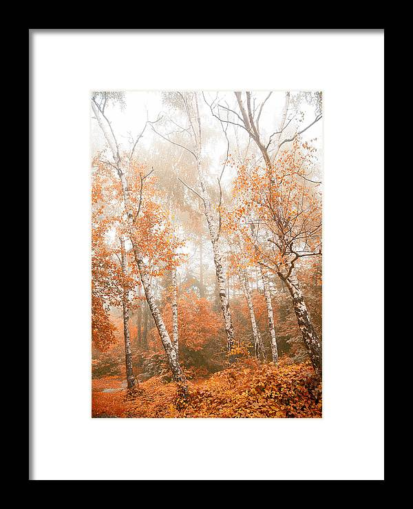 Wilderness Framed Print featuring the photograph Foggy Autumn Aspens by Eti Reid