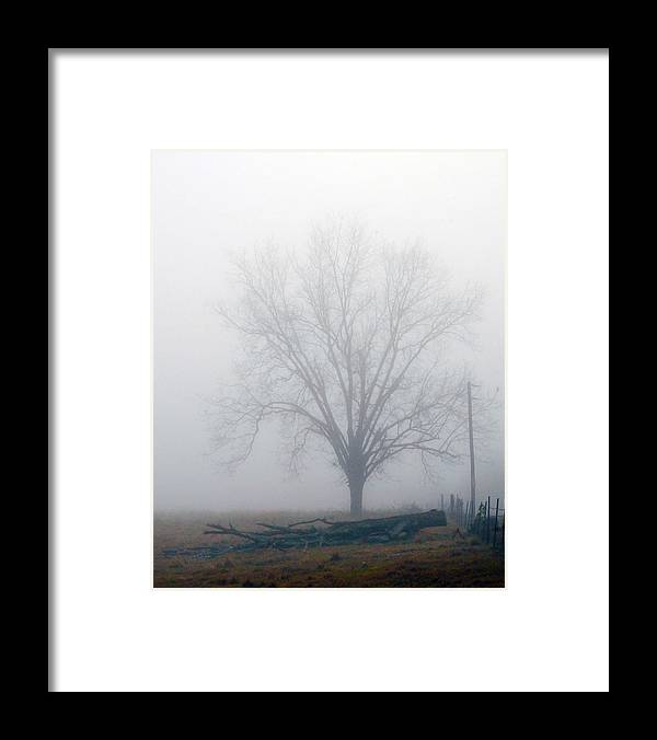 Tree Framed Print featuring the photograph Foggy Sunday II by Leon Hollins III