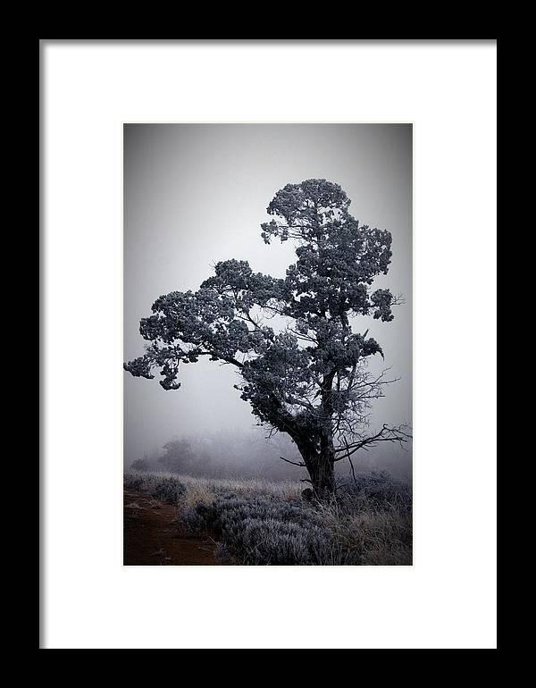 Trees Framed Print featuring the photograph Foggy Winter I by Rebecca Basden