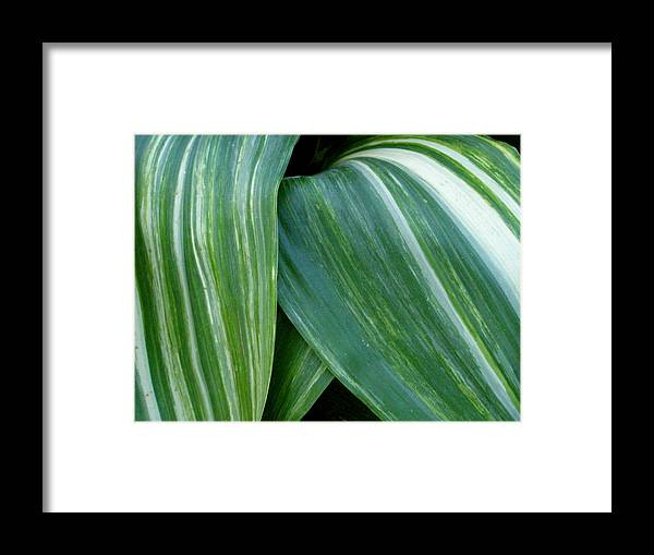 Plant Framed Print featuring the photograph Foliage Folds by Kevin B Bohner