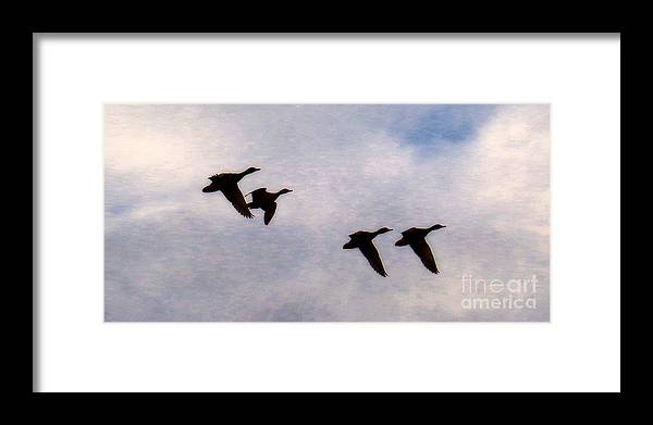 Blue-winged Teal Framed Print featuring the photograph Follow The Leader by Scott Cameron