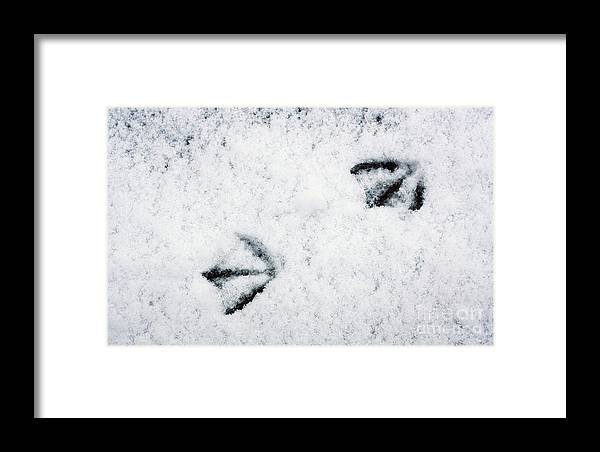 Footprints In The Snow Framed Print featuring the photograph Footprints In The Snow by Jolanta Meskauskiene