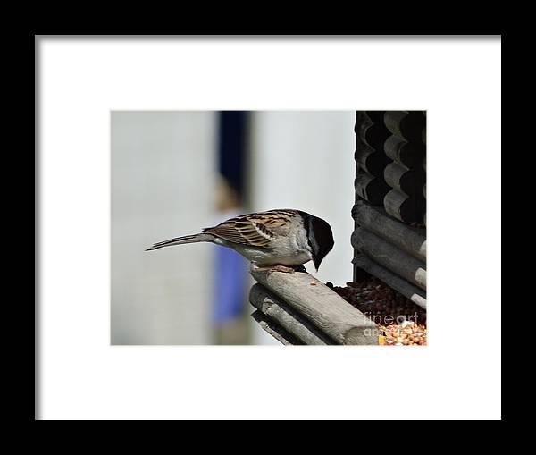 Birch Framed Print featuring the photograph For Me by Scott B Bennett