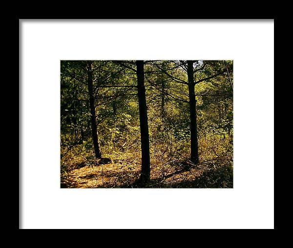 Trees Framed Print featuring the photograph Forest Hike by Moriah Brown