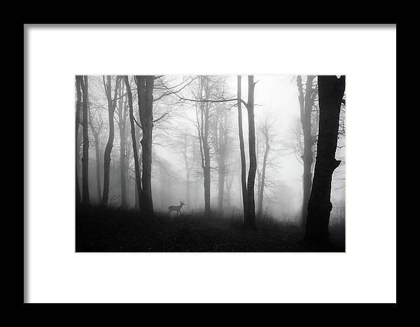Deer Framed Print featuring the photograph Forest by ?mm? Nisan