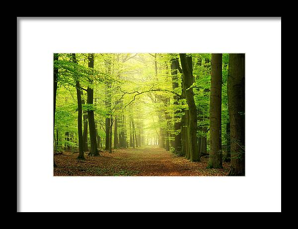 Tranquility Framed Print featuring the photograph Forest Path by Bob Van Den Berg Photography