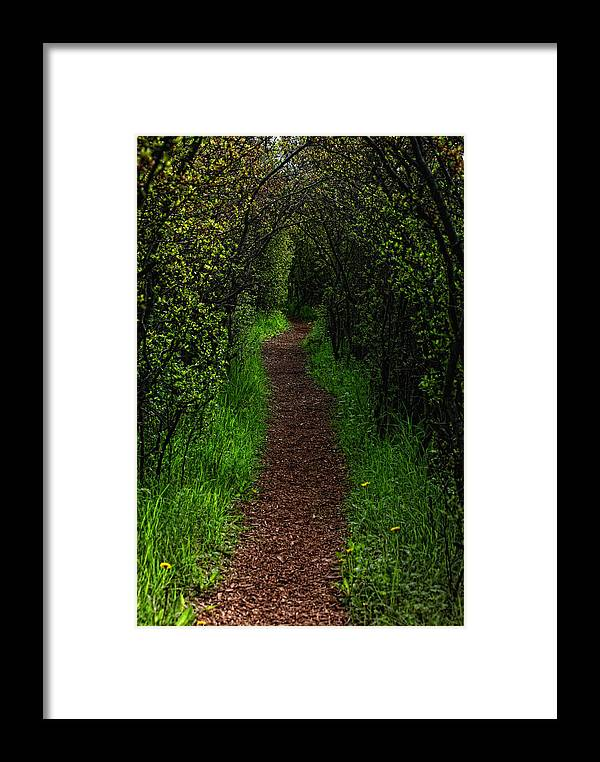 Green Framed Print featuring the photograph Forest Path by Kent Mathiesen