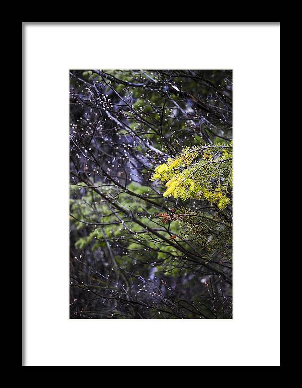 Forest Framed Print featuring the photograph Forest Peace by Fran Riley