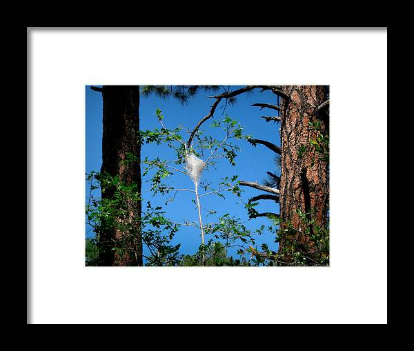 Goldwater Lake Framed Print featuring the photograph Forest Silkworm Nest by Aaron Burrows