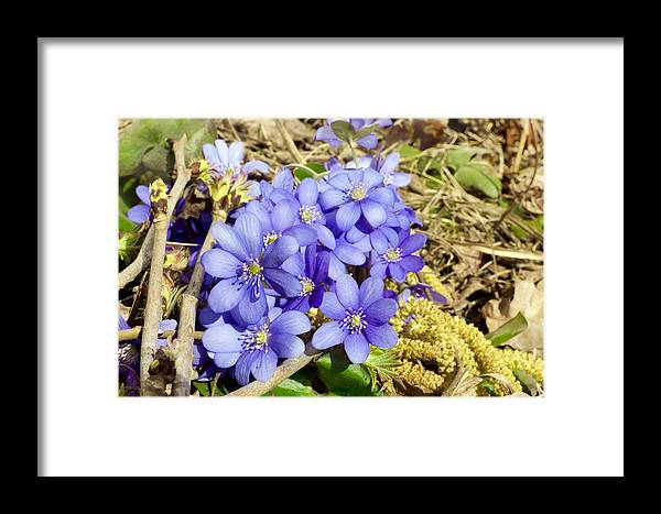 Spring Framed Print featuring the photograph Forest Spring Concept by Aleksandr Volkov