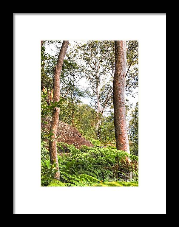 Forest Framed Print featuring the photograph Forest Walk 16 by Christopher Edmunds