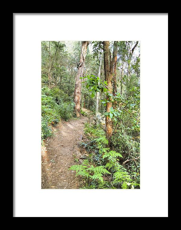 Forest Framed Print featuring the photograph Forest Walk 17 by Christopher Edmunds