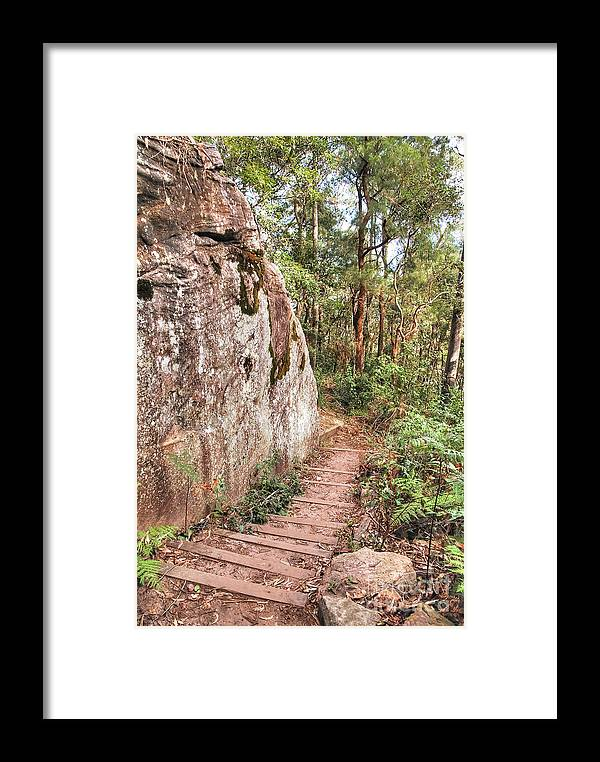 Forest Framed Print featuring the photograph Forest Walk 5 by Christopher Edmunds