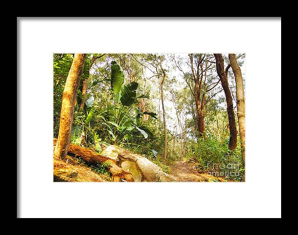 Forest Framed Print featuring the photograph Forest Walk 6 by Christopher Edmunds